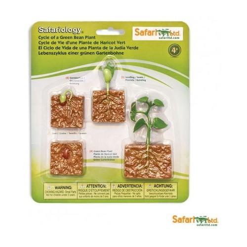 Vývoj zelená fazole - Safari Ltd Safariology