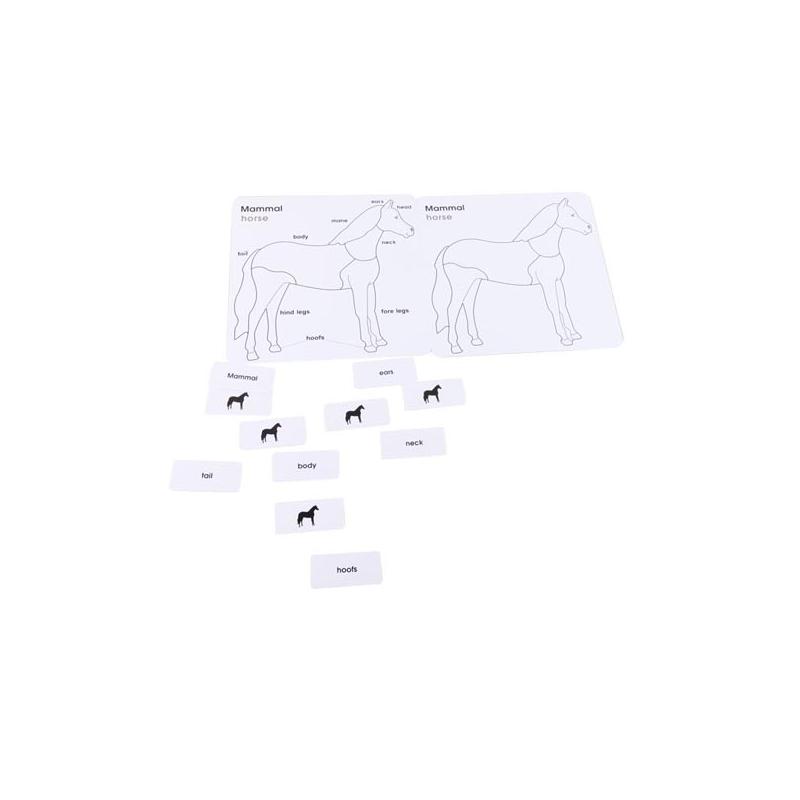 Anglické karty pro puzzle - kůň