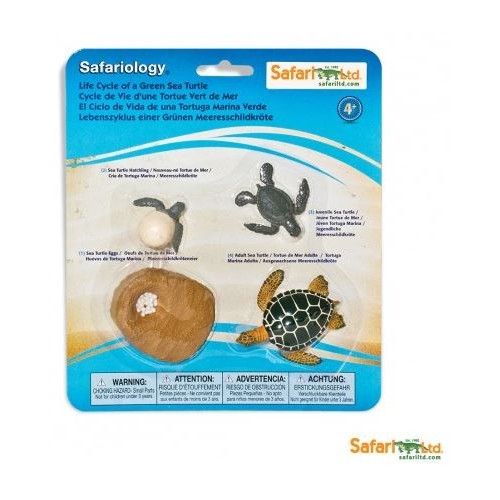 Vývoj Mořská želva - Safari Ltd Safariology