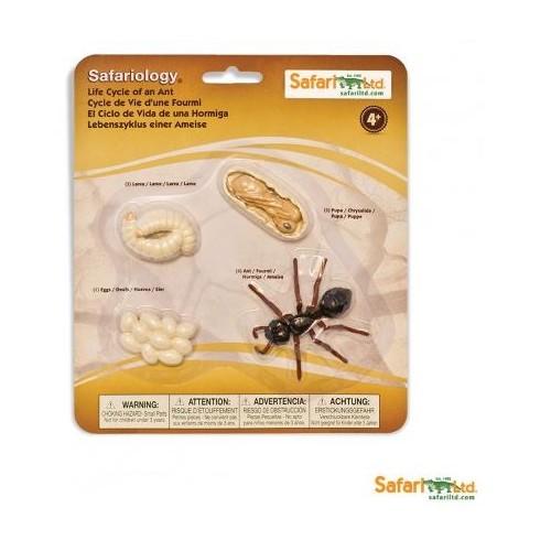 Vývoj mravenec - Safari Ltd Safariology