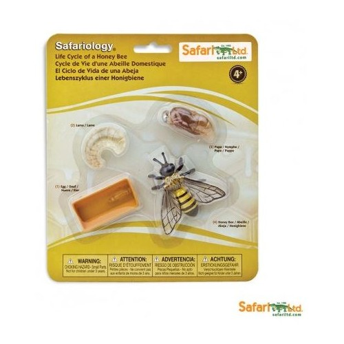 Vývoj včela - Safari Ltd Safariology