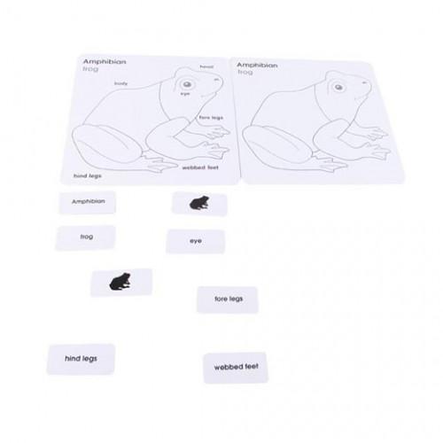 Anglické karty pro puzzle - žába