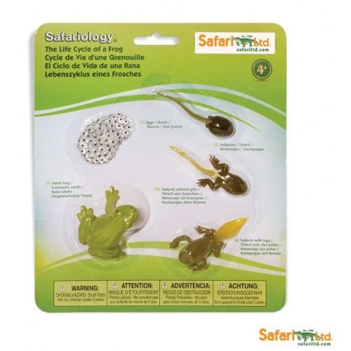 Vývoj žáby - Safari Ltd Safariology