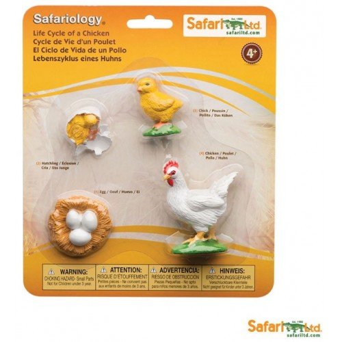 Vývoj kuřete - Safari Ltd Safariology