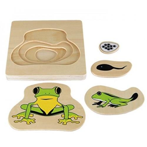 3D Puzzle vývojová stádia - žába